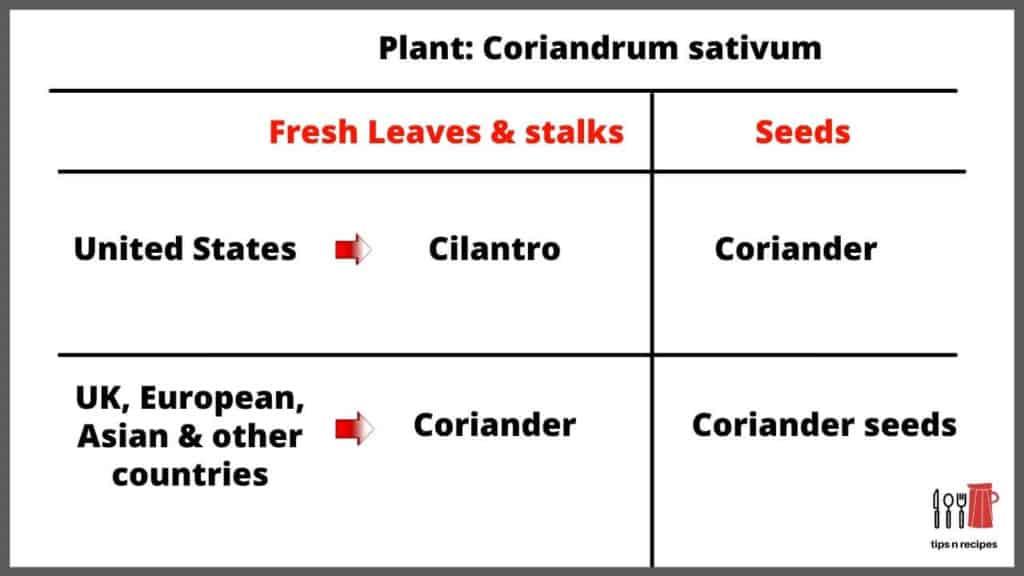 coriander chutney Indian
